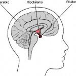 glandula pituitaria