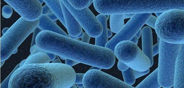 bacterias comensales