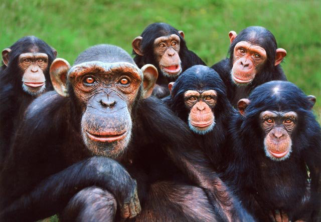 grupo_macacos